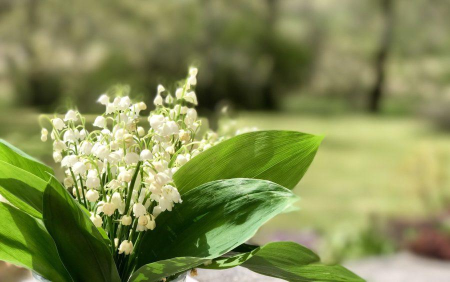 Plante Toxique Chien Of Ces Plantes Toxiques Pour Nos Animaux Clinique