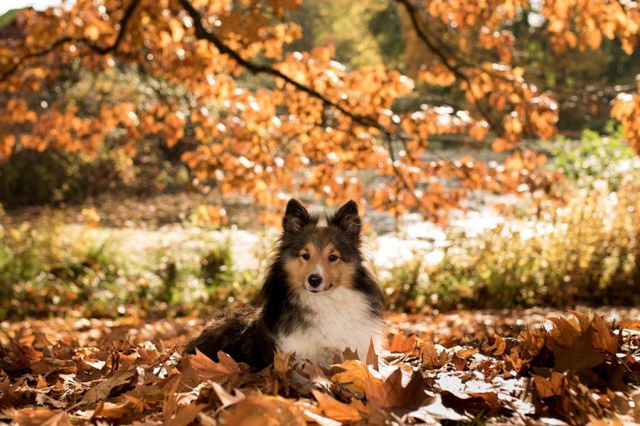 https://clinique-veterinaire-acacias.com/wp-content/uploads/2017/09/chien-chat-conseil-automne-900x600.jpg