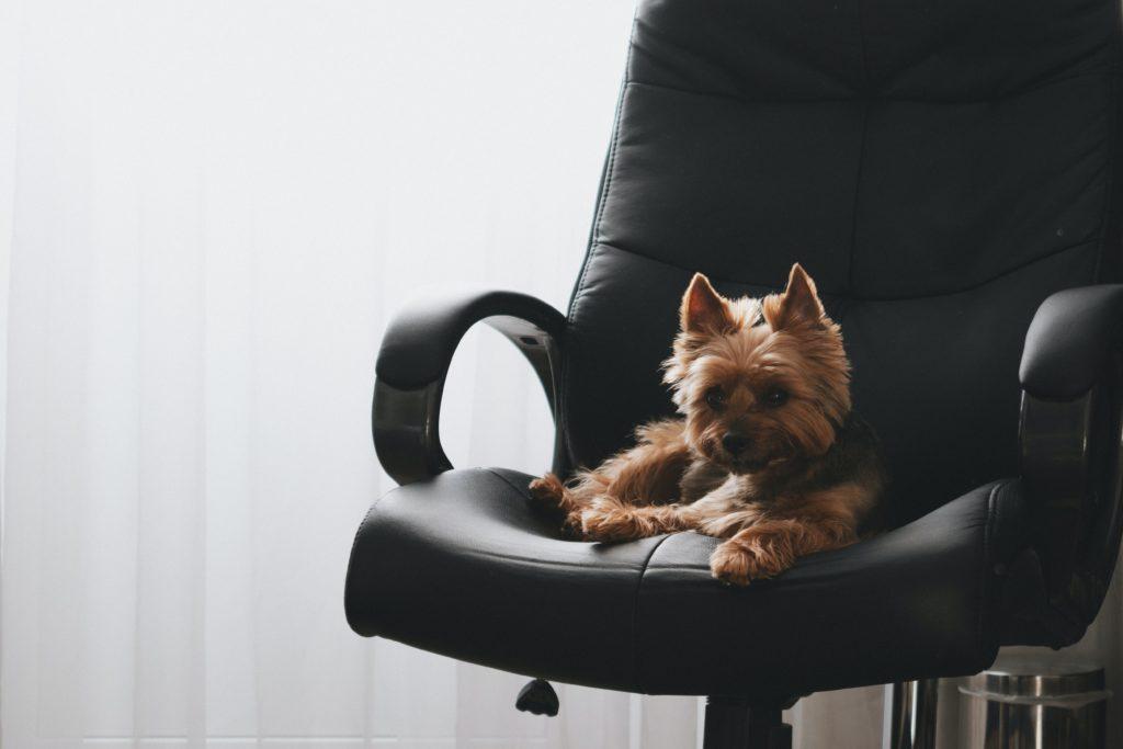 Activités insolites animaux - L'emmener au boulot